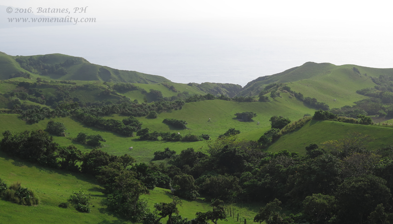 Batanes Liveng, trees and shrubs